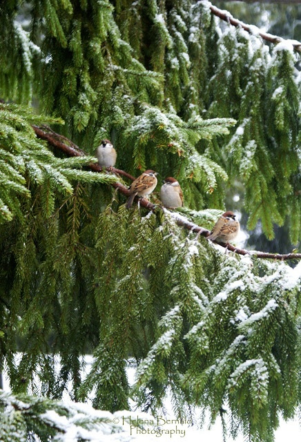 Winter Birds